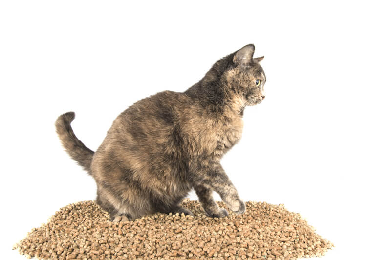 Pellets for Cat Litter