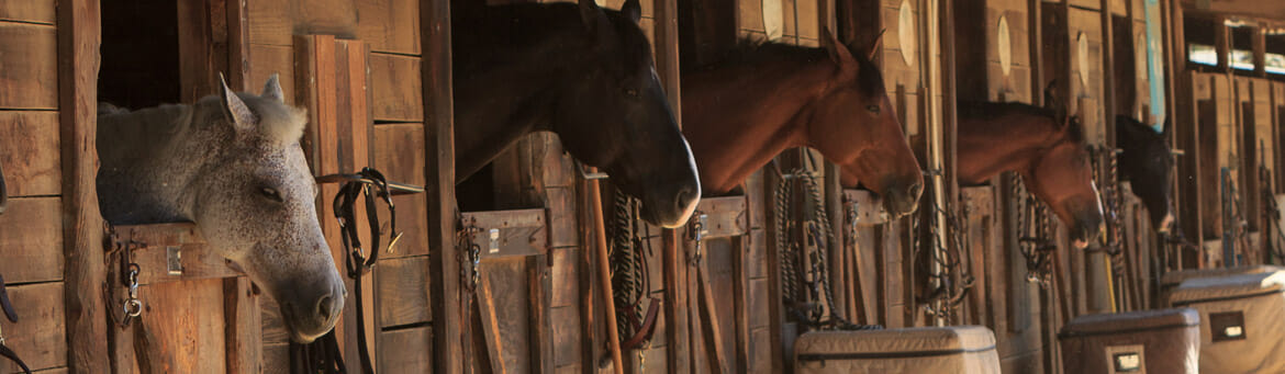 Bedding Pellets for Your Horses