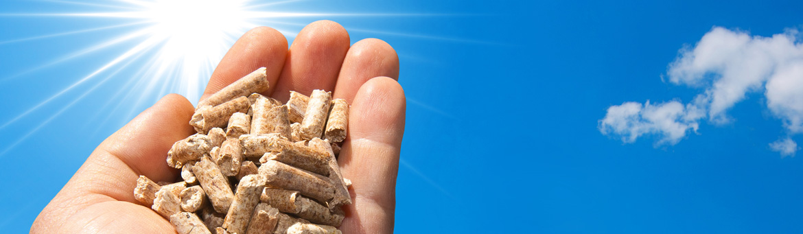 Softwood Heating Pellets for a Better Earth